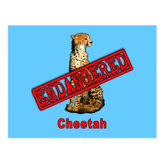 Carte Postale Produits mis en danger de guépard