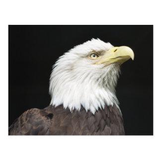 Carte Postale Profil américain d'Eagle chauve