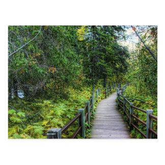Carte Postale Promenade par des bois
