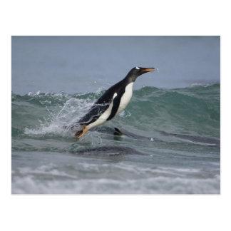 Carte Postale Pygoscelis Papouasie de pingouin de Gentoo)