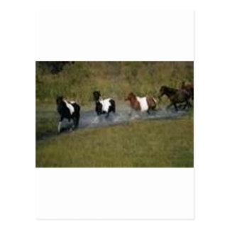 Carte Postale Ranch de cheval (kkincade12)