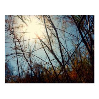 Carte Postale Rayons de Sun au ranch