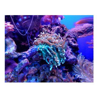 Carte Postale récif coralien