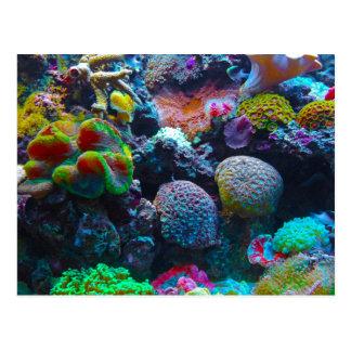 Carte Postale Récif coralien magnifique