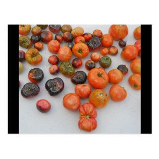 Carte Postale Récolte de tomate