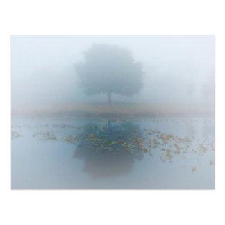 Carte Postale Réflexion brumeuse d'arbre