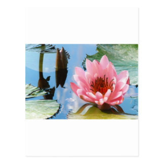 Carte Postale Réflexion rose de nénuphar