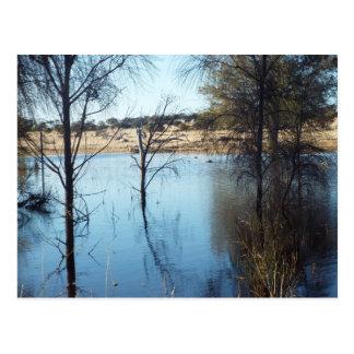 Carte Postale réflexions de sheoak