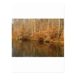 Carte Postale Réflexions rurales