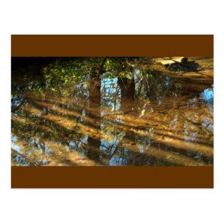 Carte Postale réflexions sur la nature