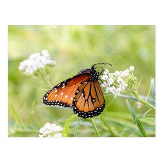 Carte Postale Reine exposant au soleil sur le milkweed