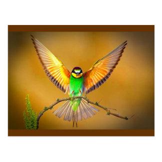 Carte Postale Répandez vos ailes