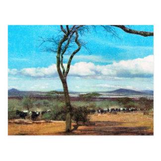 Carte Postale Reproduction Tanganyika vintage, masai, troupeau