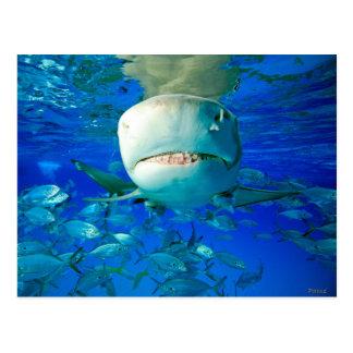 Carte Postale Requin de citron