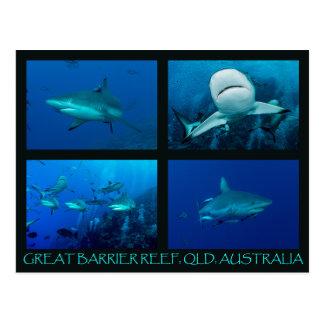 Carte Postale Requins de récif de la mer de corail