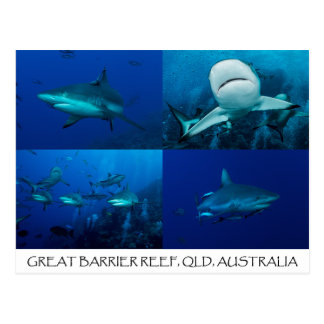 Carte Postale Requins de récif sur la Grande barrière de corail