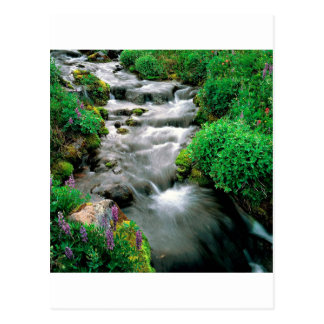 Carte Postale Réserve indienne d'Adams Yakima de bâti de rivière