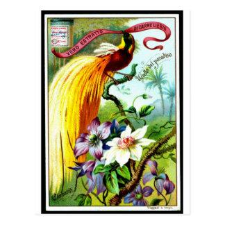 Carte Postale Rétro oiseau Postacard de paradis