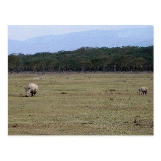 Carte Postale Rhinocéros blancs