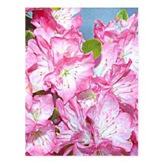 Carte Postale Rhododendron de côte de Washington