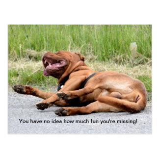 Carte postale riante drôle de chien