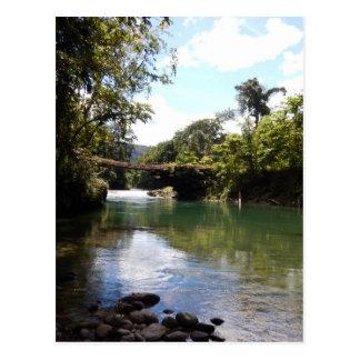 Carte Postale Rivière et forêt tropicale