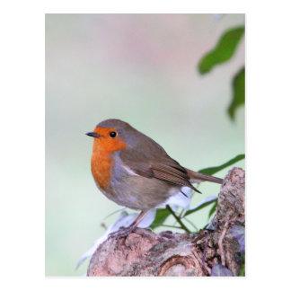 Carte Postale Robin