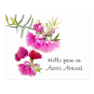 Carte postale rose australienne de fleur sauvage