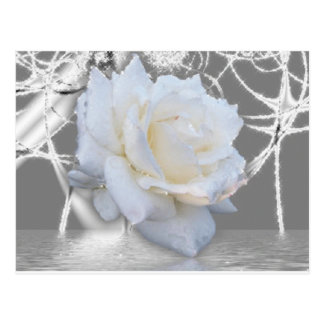 Carte Postale rose blanc