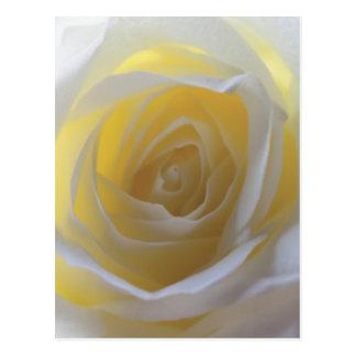 Carte Postale Rose blanc élégant