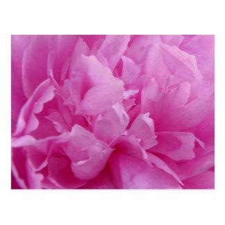 Carte postale rose de pétales de pivoine