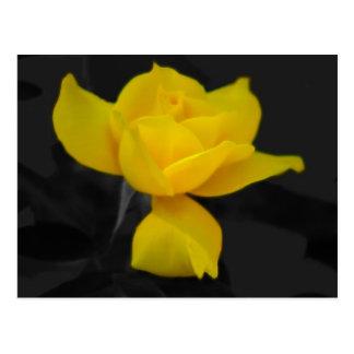 Carte Postale Rose jaune et signification