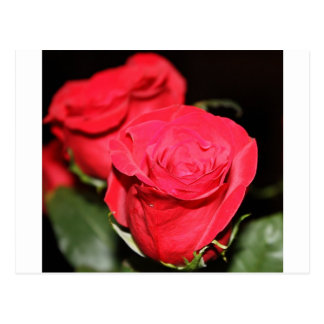 Carte Postale Rose rouge