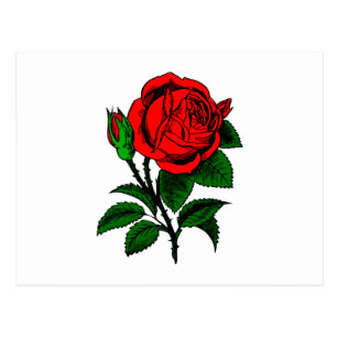 Cartes Postales Dessin Rose Rouge Originales Zazzle Be