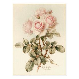 Carte Postale Roses romantiques victoriens vintages
