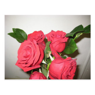 Carte Postale Roses rouges renversants