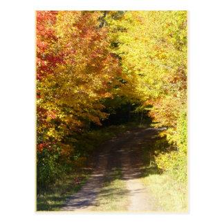 Carte Postale Route d'automne