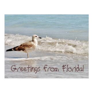 Carte Postale Salutations de mouette de la Floride Miami
