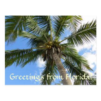 Carte Postale Salutations de palmier de la Floride/noix de coco
