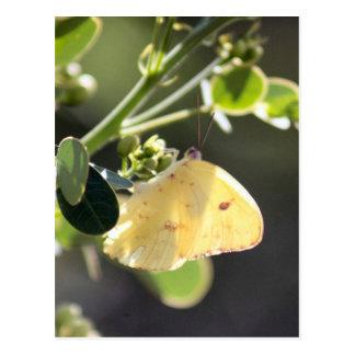 Carte postale sans nuages de photo de papillon de