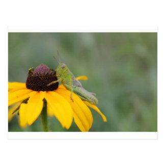 Carte postale sautante de fleur