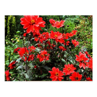 Carte Postale Sauver flowers