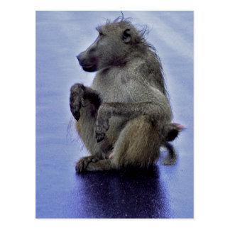 Carte Postale Séance de babouin
