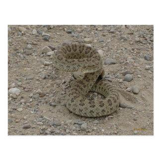 Carte Postale Serpent à sonnettes de prairie R0009