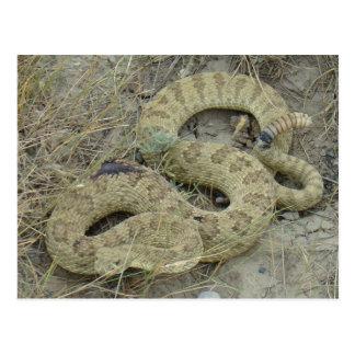 Carte Postale Serpent à sonnettes de prairie R0020