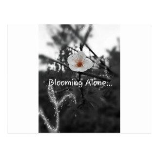 Carte Postale seule floraison