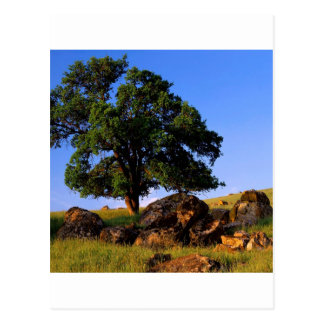 Carte Postale Sierra collines d'arbres de Nevada