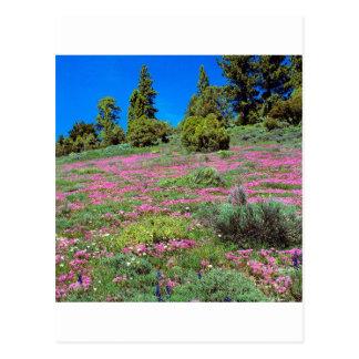 Carte Postale Sierra collines la Californie de printemps de