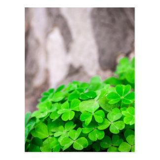 Carte Postale Signe vert d'Irlandais de trèfle