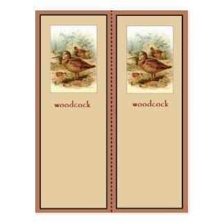 Carte Postale Signet mignon de Woodcock américain
